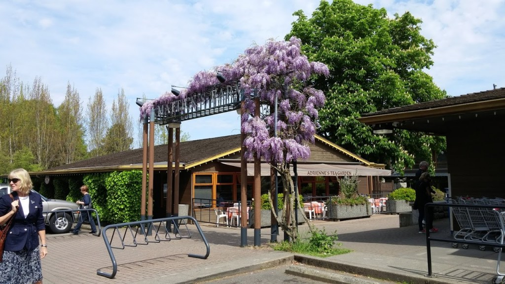 Wisteria arbour with Linda